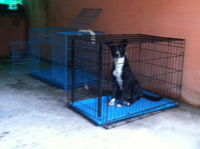 Animal Rescue Project - Jan-Feb 2016 (17)